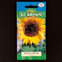 Sunflower - Sun King | Seeds | Watkins Flower Seeds