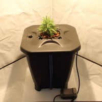 Oxypot Deep Water Culture System 19L | Hydroponic Gear