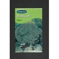 Broccoli Super King | Seeds | Watkins Vegetable Seeds