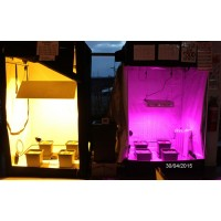 LED vs HPS Grow Comparison.  | LED Grow Lights | LED Lights